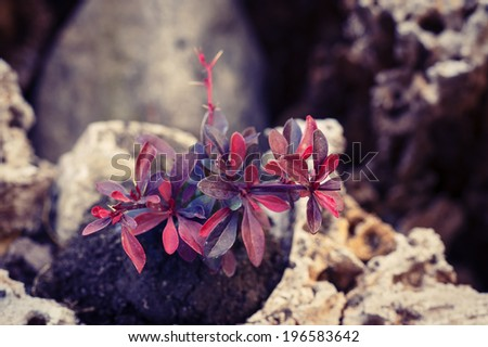 garden flower - stock photo