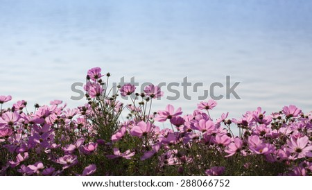 Garden Flowers - stock photo