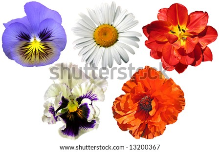 Garden flowers collection - stock photo