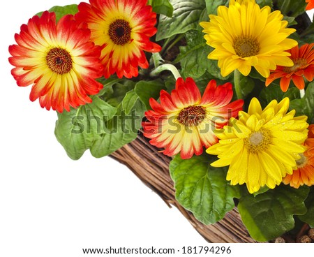garden flowers for wooden fence  isolated on white background - stock photo