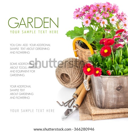 Garden flowers in wooden basket with garden tools. Isolated on white background - stock photo
