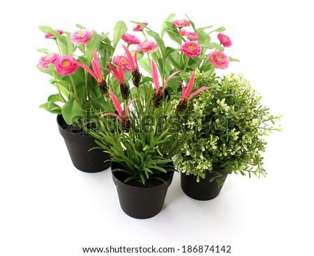 garden flowers isolated on white - stock photo