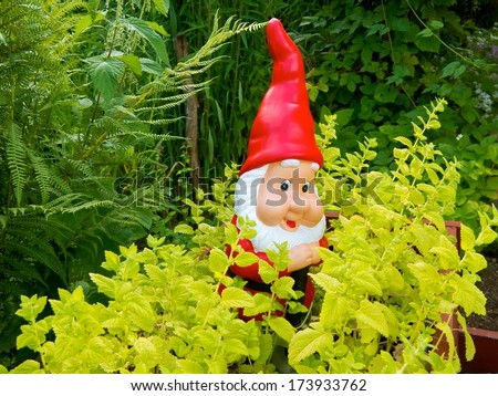 Garden Gnome among lemon balm plants in the garden.