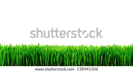 Garden grass isolated on white background - stock photo