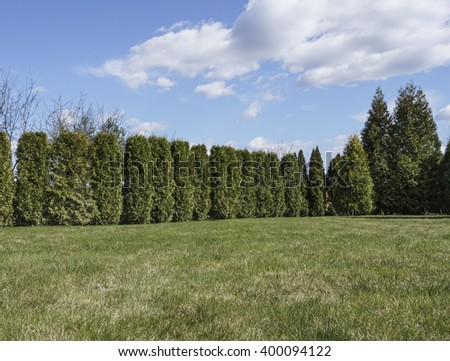 garden has fence by pine trees under beautiful sky - stock photo