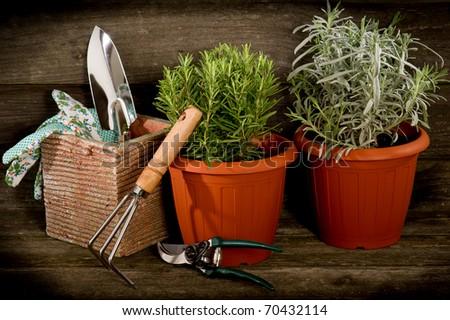 garden herbs with utensil - stock photo
