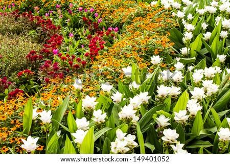 garden in the royalflora chiangmai Thailand - stock photo