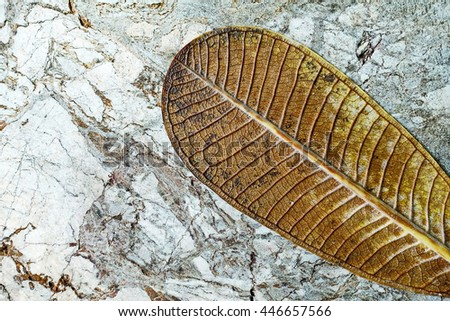 garden leaves on natural marble patterned - stock photo
