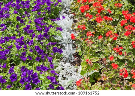 Garden of different colors flowers