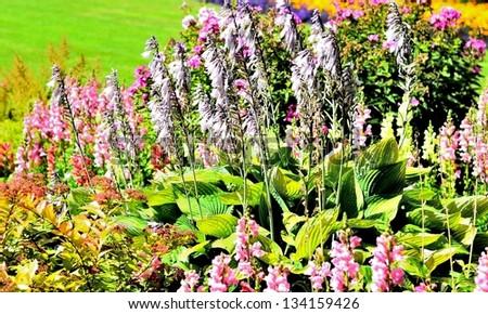 Garden of purple flowers on sunny day - stock photo