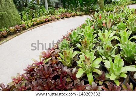 Garden pathway and bromeliad. - stock photo