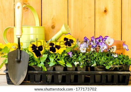 Garden planting with violas, pansies, watering can, trowel, and pots on wood background. - stock photo