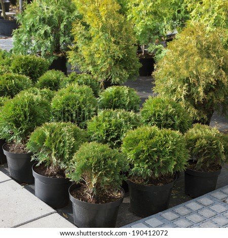Garden plants being sold in plant nursery - stock photo