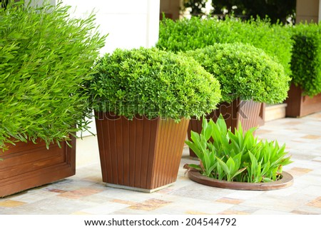 Garden pots with lush bushes - stock photo