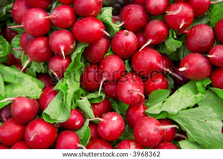 Garden radish - stock photo