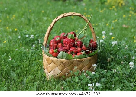 Garden scene with fresh strawberry in wicker basket on a green grass, lawn. Image for calendar. Sunny summer day, outdoor and space, natural light and shadows - stock photo