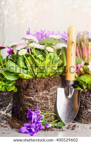Garden shovel and planting flowers with soil and roots. Gardening concept - stock photo