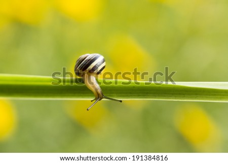 Garden snail - stock photo