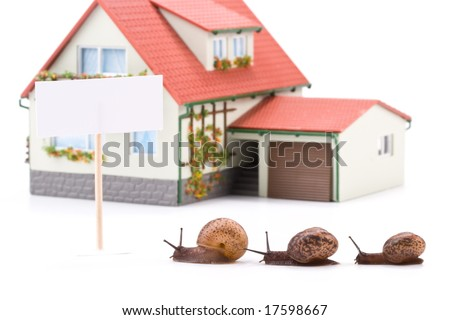 Garden snail and miniature house on a white background. Buying house concept