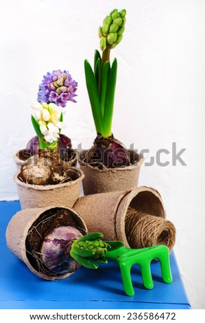 Garden tools and colorful flowers - stock photo
