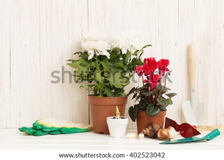 Garden tools and flowers on white wooden background