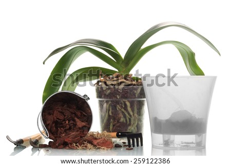 Garden tools and orchid plants in pot isolated on white - stock photo