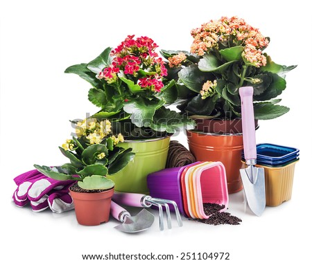 garden tools with flowers isolated on white background - stock photo