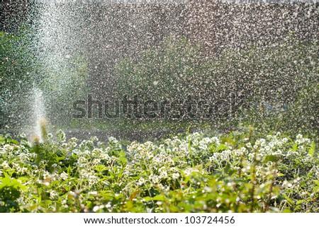 garden watering, huge amount of water drops - stock photo