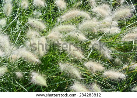 Garden with Close Up of Fountain Grass - stock photo