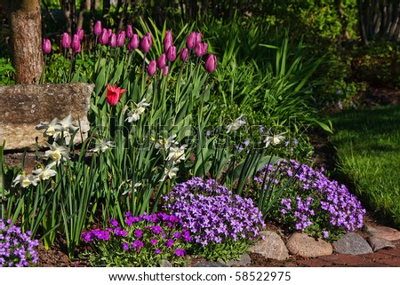 Garden with flowerbeds and various colorful flowers - stock photo