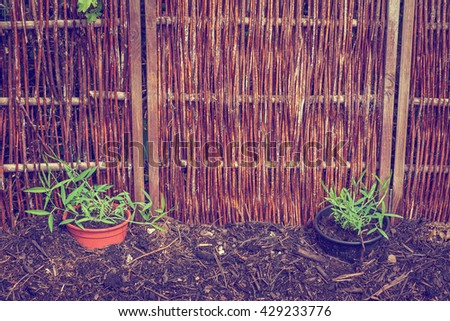 Garden with green plants in flowerpots - stock photo