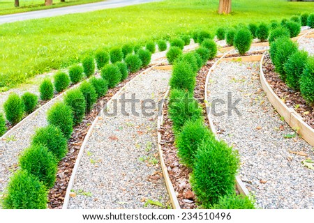 Garden with rows of young thuja saplings. Summertime outdoors. - stock photo