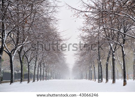 garden with snow - stock photo