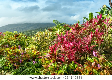 Garden with various tropical plants and flower growing in a pattern - stock photo