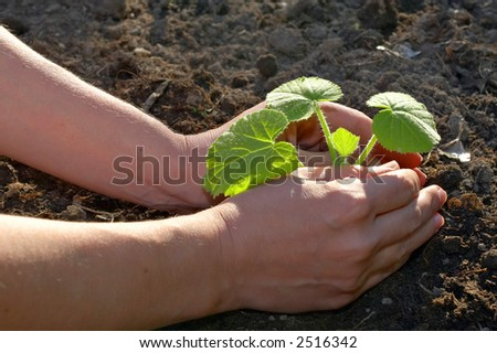 garden work - planting hands closeup - stock photo