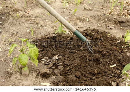 gardener cultivating ground with a hand tool