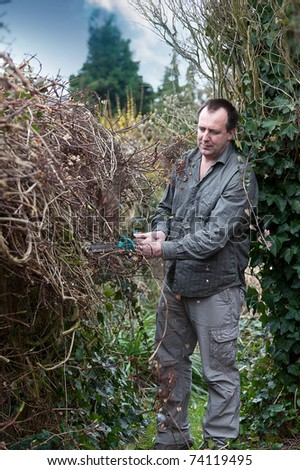 gardener cutting the hedge with a electrical hedge cutter. - stock photo