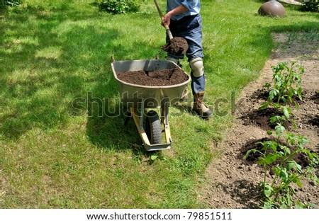 Gardener hilling potato plants - stock photo