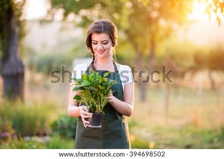 Gardener holding a seedling in flower pot, sunny nature - stock photo