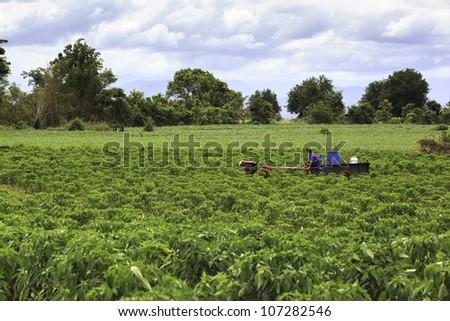 Gardener mowingu in the lawn. - stock photo