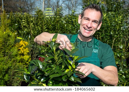 Gardener pruning a tree or plant in nursery - stock photo