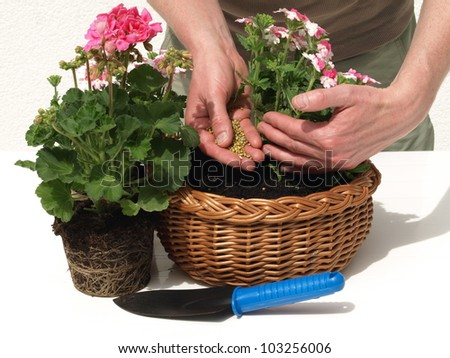 Gardener taking care of his plants and fertilizing - stock photo