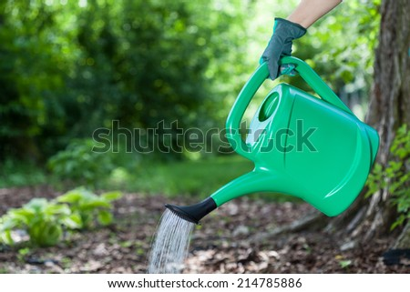 Gardener watering plants on sunny spring time - stock photo