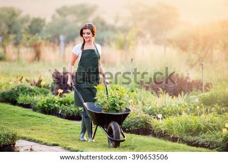 Gardener with seedling in wheelbarrow, sunny nature - stock photo