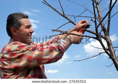 Gardener with smile on his face cutting tree on blu sky background
