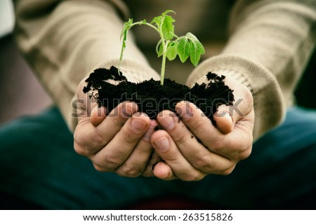 Gardener with vegetable seedling. Spring garden. Plant seedling in farmers hands. - stock photo