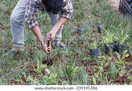 Gardeners - stock photo