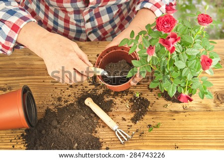 Gardeners hand planting flowers in pot with dirt or soil. - stock photo