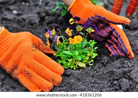 Gardeners hands planting flowers in a garden - stock photo