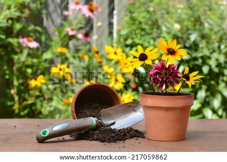 gardeners table with flowers - stock photo